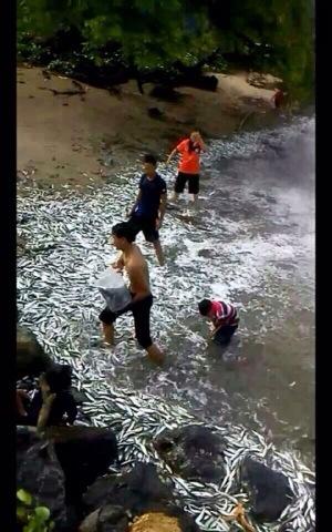 Ikan terdampar di pantai bukan petanda tsunami, kata pakar | omaQ org